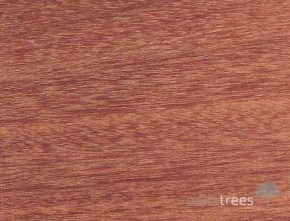 Balsamo wood texture