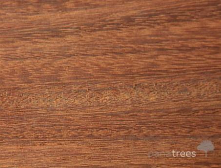 Almendro wood texture