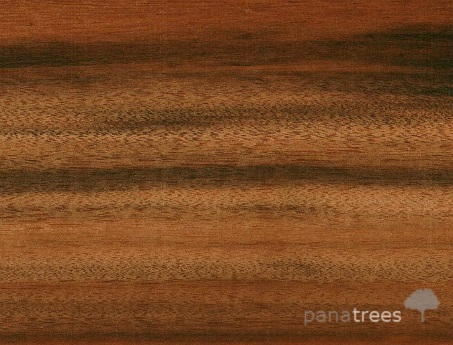 Tigerwood, Goncalo Alves, Zorro