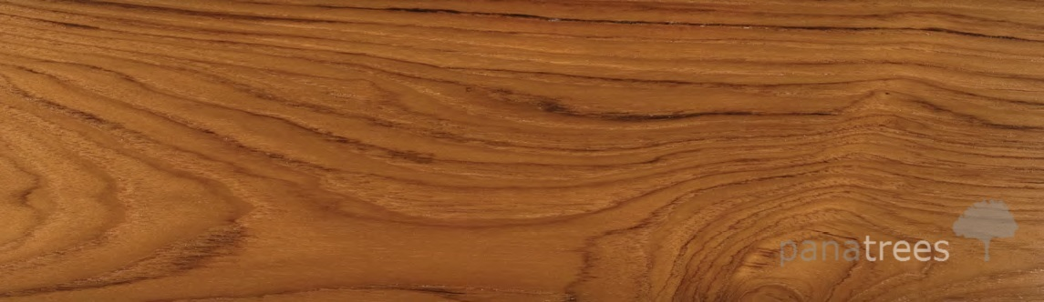 Teak Tectona Grandis Panatrees Inc Usa Exotic