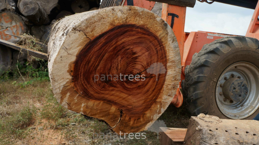 Tigerwood Goncalo Alves wood log