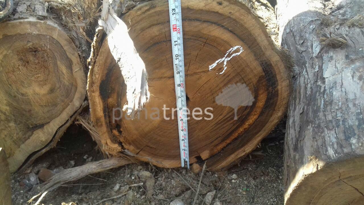 Bocote logs