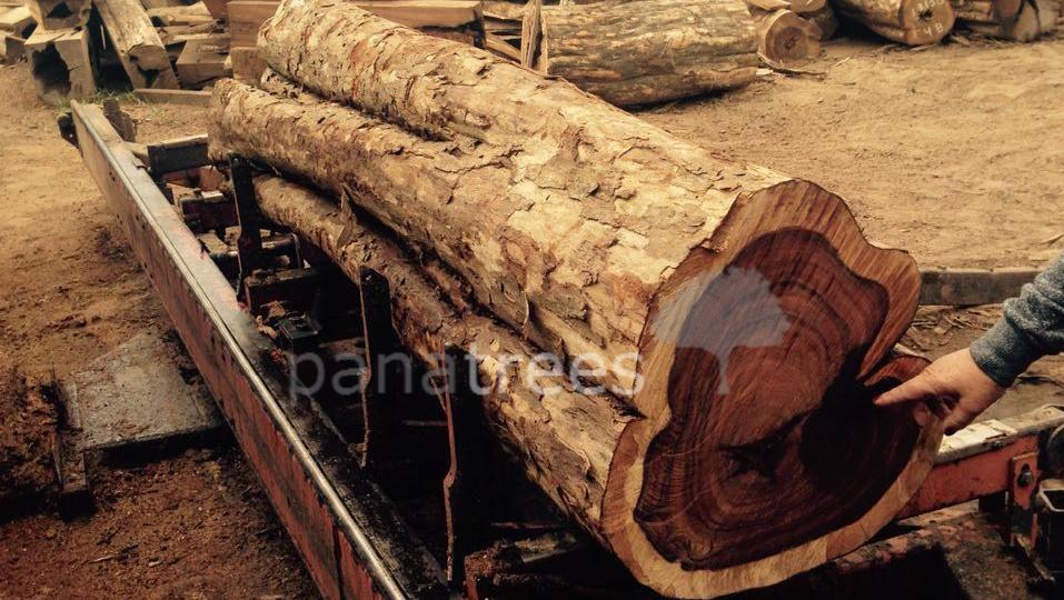 Morado Pau Ferro Bolivian Rosewood Santos Rosewood